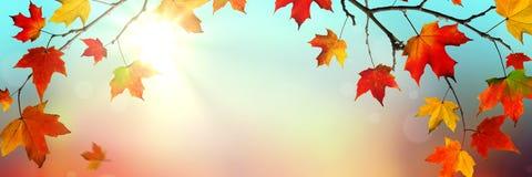 Folhas de queda no outono fotografia de stock royalty free