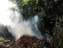 Folhas de queimadura nos trópicos video estoque