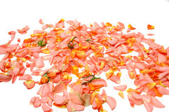 Folhas de Rosa Foto de Stock