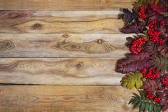 Folhas de Rowan da queda e bagas vermelhas no fundo de madeira, termas da cópia Imagens de Stock Royalty Free