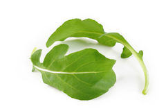 Folhas de Rucola Imagem de Stock