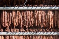 Folhas de secagem do tabaco Imagem de Stock