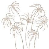 Folhas de Tsiperus ajustadas Fotos de Stock