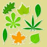 Folhas de plantas diferentes Fotos de Stock Royalty Free