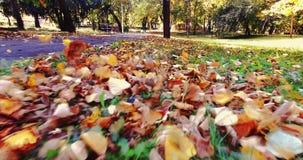 Folhas de voo do outono vídeos de arquivo