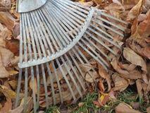 Folhas decíduos de limpeza Imagens de Stock