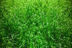 Folhas decorativas das plantas fotos de stock royalty free