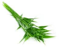 Folhas decorativas do bambu Foto de Stock