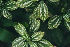 Folhas delgadas verdes em um fundo borrado imagens de stock