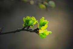Folhas delicadas imagens de stock
