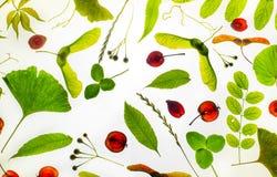 Folhas diferentes das plantas foto de stock