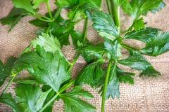 Folhas do aipo Foto de Stock
