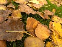 Folhas do amarelo Foto de Stock Royalty Free