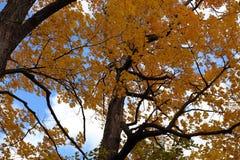 Folhas do amarelo foto de stock