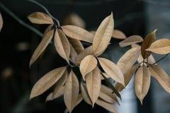 Folhas do amarelo Fotos de Stock