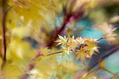 Folhas do amarelo com foco seletivo Imagens de Stock Royalty Free