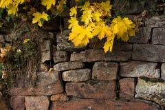 Folhas do amarelo contra uma parede de tijolo Foto de Stock