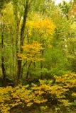 Folhas do amarelo da queda em montanhas fumarentos Imagens de Stock Royalty Free