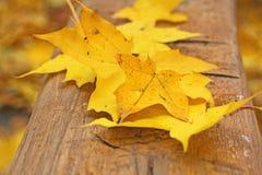 Folhas do amarelo de Abscissed Foto de Stock Royalty Free