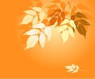 Folhas do amarelo do outono Foto de Stock