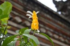 Folhas do amarelo e flor emergente branca Foto de Stock