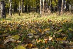 Folhas do amarelo na grama fotos de stock royalty free