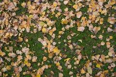 Folhas do amarelo na grama verde Fotos de Stock Royalty Free