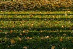 Folhas do amarelo na grama verde Imagem de Stock