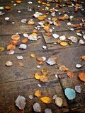 Folhas do amarelo na madeira Imagens de Stock