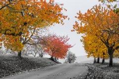 Folhas do amarelo na névoa fotografia de stock