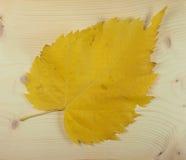 Folhas do amarelo na queda Imagens de Stock