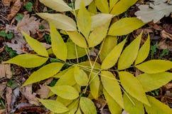 Folhas do amarelo na terra imagem de stock