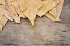 Folhas do amarelo no fundo de madeira Fotografia de Stock Royalty Free