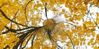 Folhas do amarelo do outono com fundo colorido vibrante Pouco planeta Fotos de Stock Royalty Free