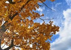 Folhas do amarelo sob o céu azul imagens de stock