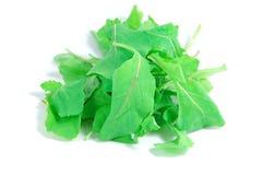 Folhas do Arugula Fotos de Stock