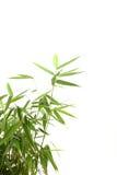 Folhas do bambu imagem de stock royalty free