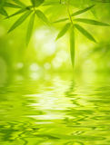 Folhas do bambu Fotografia de Stock Royalty Free