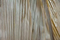 Folhas do bambu Fotos de Stock Royalty Free