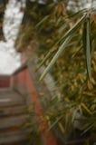 Folhas do bambu Foto de Stock Royalty Free