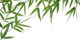 Folhas do bambu Fotos de Stock