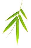 Folhas do bambu Imagem de Stock