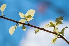 Folhas do branco Fotografia de Stock