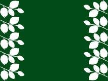 Folhas do branco com fundo verde Imagens de Stock