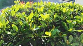 Folhas do bronzeado Imagem de Stock Royalty Free