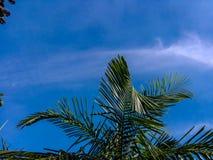 Folhas do céu azul e do verde imagem de stock