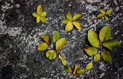 Folhas do cal no assoalho imagem de stock