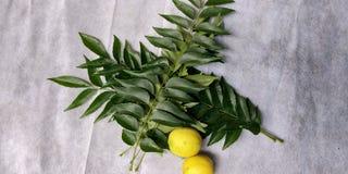 Folhas do caril com limão Fotografia de Stock