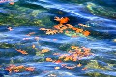 Folhas do carvalho do outono que flutuam na água Imagem de Stock Royalty Free