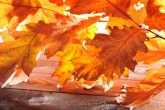 Folhas do carvalho na madeira Fotos de Stock Royalty Free